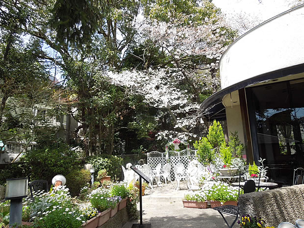 パラディ北野の桜